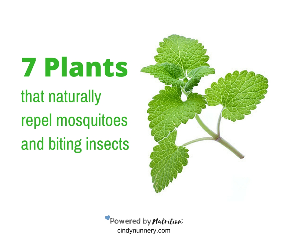 7 Plants That Naturally Repel Mosquitoes And Biting